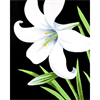 Pattern Pack - Easter Lily/1 SPO
